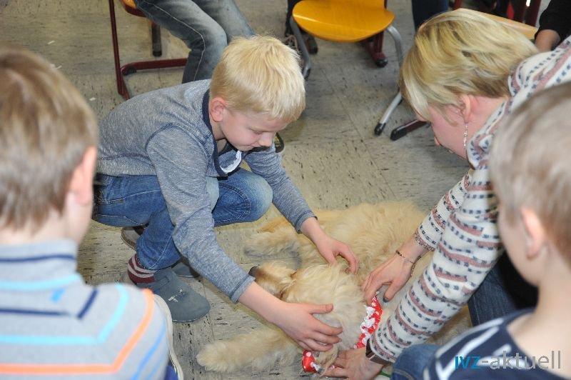 web_2402 Therapiehund Happy (13)