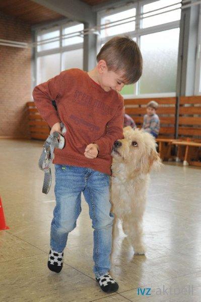web_2402 Therapiehund Happy (3)