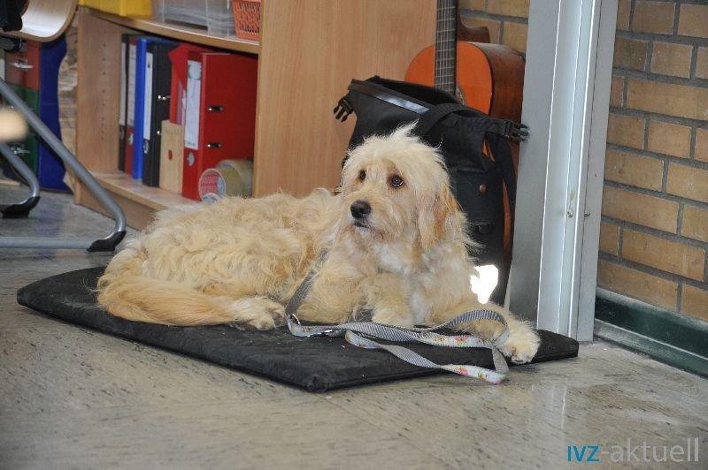 web_2402 Therapiehund Happy (9)