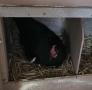 20180606 Vom Ei zum Huhn_0005