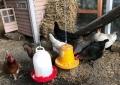 20180606 Vom Ei zum Huhn_0009